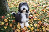 Autumnpuppy