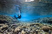 Scubadiving And Coral
