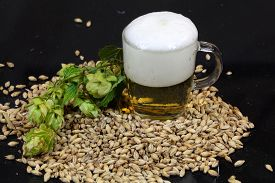 image of malt  - A glass of beer with malt and hops - JPG