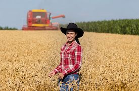 pic of cowgirl  - Cowgirl with plaid shirt and black hat walking in ripe wheat field during harvest - JPG