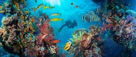 foto of fire coral  - Tropical Anthias fish with net fire corals on Red Sea reef underwater - JPG