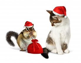 foto of chipmunks  - Funny xmas pets amusing chipmunk and cat with santa hat and sack - JPG