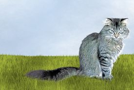 image of annoying  - Annoyed gray tabby cat siiting in grass - JPG