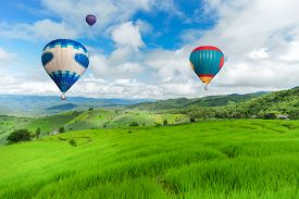 pic of rice  - Balloon flying on rice field - JPG
