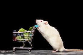 stock photo of rats  - Cute pet rat with a shopping cart on dark background - JPG