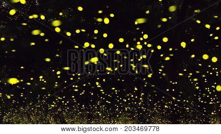 firefly flying at
