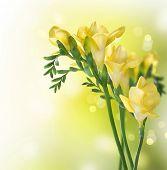 Fresia flores
