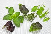 Salad Greens And Spices
