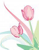 Постер, плакат: Розовый вектор тюльпаны с зелеными листьями и декоративные фигуры