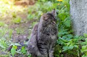 A Beautiful Cat With A Gaze Sits On The Lawn In The Garden On A Summer Sunny Day. poster