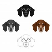 Dog, Breed Dachshund.muzzle Of The Dachshund Single Icon In Cartoon, Black Style Vector Symbol Stock poster