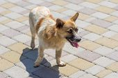 Outdoor Portrait Of Cute Mixed Breed Stray Dog Walking On A Pavement poster