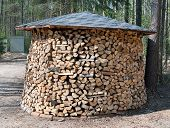 Large Round Firewood Prepared In Forest