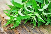 Young Nettle Leaves On Rustic Background, Stinging Nettles, Urtica poster