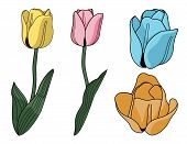 Vector Tulips
