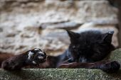 Close Up On The Toebeans On The Paws Of A Stray Black Cat, Abandoned, Sleeping And Resting, Having A poster