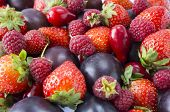 Various Fresh Summer Fruits. Ripe Strawberries, Raspberries, Red Berries And Plums. Texture Fruits C poster