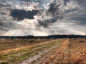 Un sendero recto es desaparecer en una reserva natural holandés