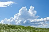 image of thunderhead  - This is a picture of grass and thunderhead I have taken in August - JPG