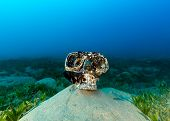 Old Plastic Skull Covered In Marine Growth Wearing A Diving Mask Sits On A Gloomily Lit Seabed