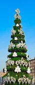 Decorative Fir Tree On Street
