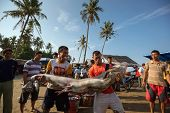 PADANG - AUGUST 25: Two fishmongers carry a freshly caught shark at a village market in Padang, West