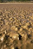 Sahara Desert In Rab, Croatian Island