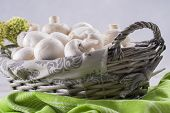 image of agaricus  - A close up photo of a edible mushrooms known as Agaricus in a basket on a bright solid background - JPG
