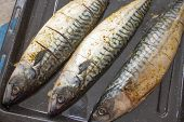 Carcasses Of Fish - A Mackerel