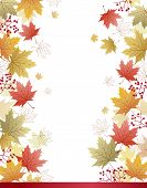Maple Leaves Corner Background