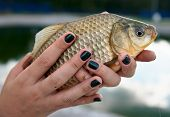 Crucian carp in young lady's hands