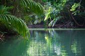 image of vegetation  - Tranquil lake surrounded with lush tropical vegetation reflected in the calm water below - JPG