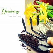 Garden Tools And Spring Daffodils