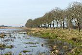 Dike along a marsh in winter