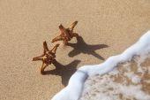Couple of Starfish