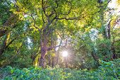 Sunlight With Trees In Forest