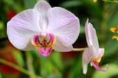 Nice white orchid flower - macro shoot