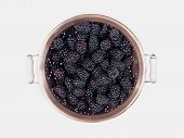 Blackberries in Copper Colander