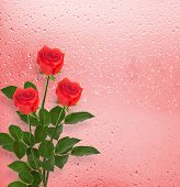 foto of san valentine  - Bouquet of red roses on the background of a window with raindrops - JPG