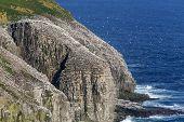 Nesting seabirds at Cape St. Mary's, Newfoundland