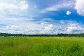 Growth Season Plain Nature