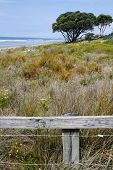 Fence in front of sand dune grasses
