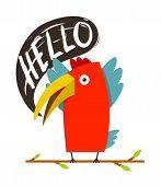 Toucan Bird Saying Hello
