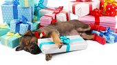 Sleeping puppy and boxes with presents isolated on white