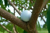 Golf ball in tre