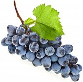 bunch of ripe dark grapes and green leaves closeup on white background