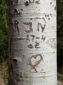 Love In A Tree poster