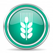 grain green glossy web icon