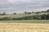 Cornfield With Windenergy - Landscape
