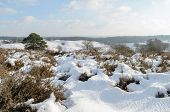 Snow On Hills In Dutch Heathland